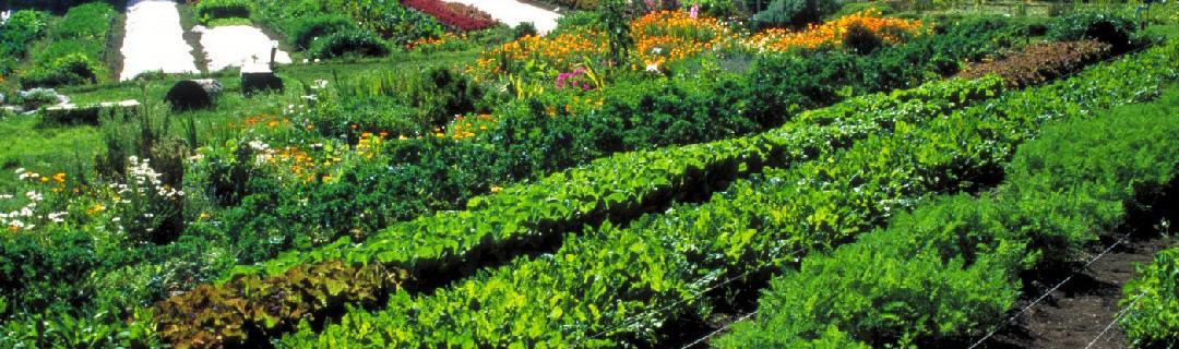 Banner-Culture-Végétaux-Permaculture